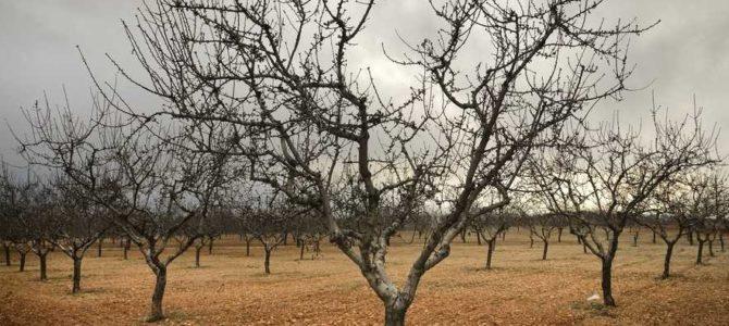 """""""Træet skal kendes på dets frugter"""""""